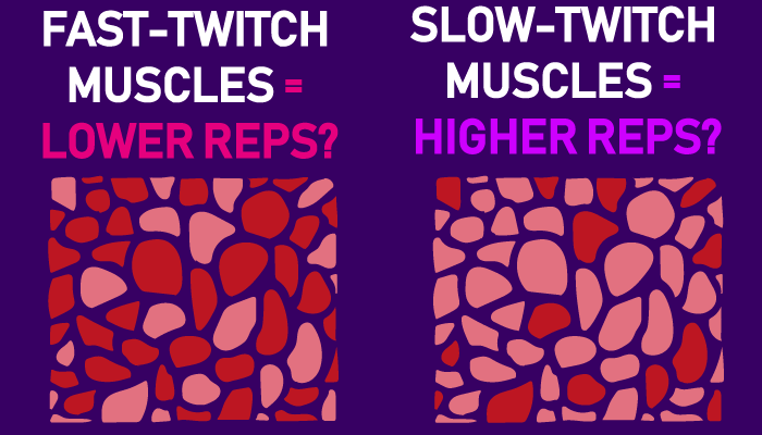 should you be training muscles based on their fiber type?