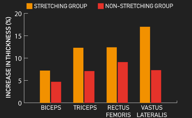 stretching in between sets vs non-stretching