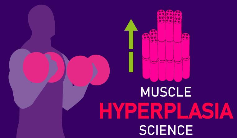 muscle hyperplasia